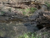 Beaver Dam