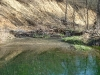 The Beaver Dam Looking Downstream 