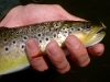 The Dry Fly Shot