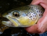 Another Dry Fly Shot
