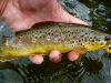 Brown on a #10 Yellow Hopper