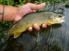 Driftless Area Brown on a Hopper