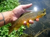 Brown on a #8 Brown/Yellow Hopper