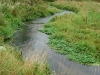 Trout Stream