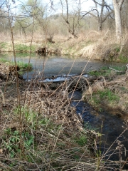 A Beaver Dam