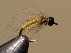 Caddis Larva tied by the W.F.F.