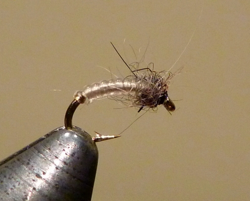 #20 White Midge