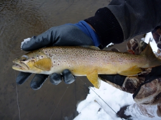 Another Thick Brown