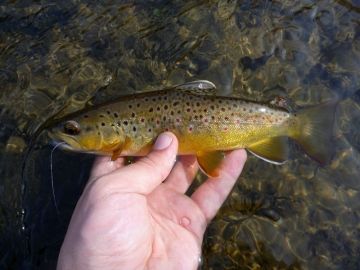 A Driftless Area Brownie
