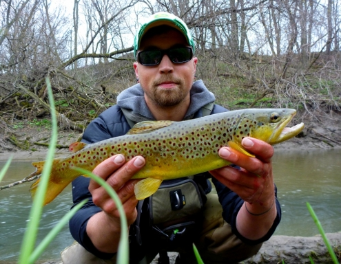 The W.F.F. and a Driftless Area Brown