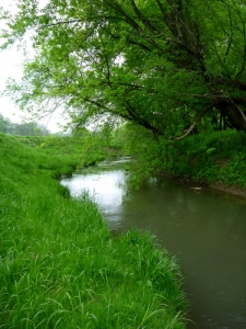 The Turbid Stream