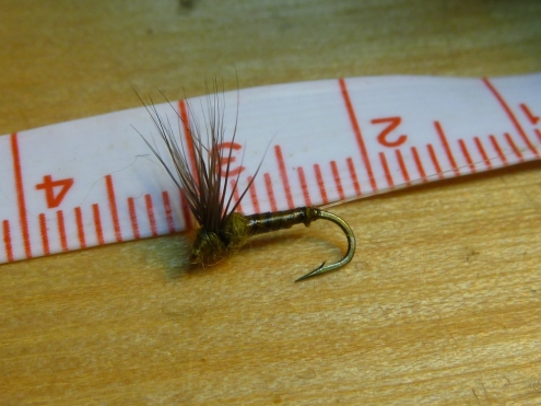 #16 BWO Size Comparison