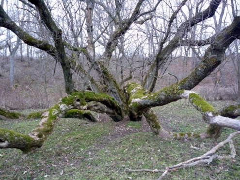 A Gnarly Tree