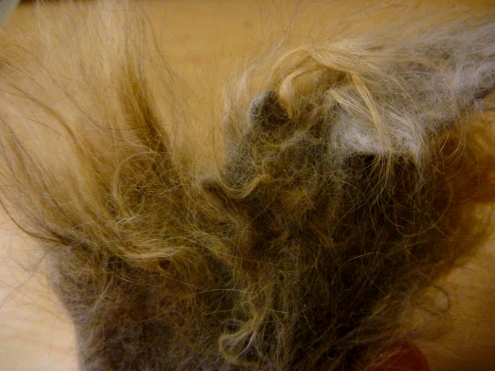 The Original Source of the Hairball: Long Haired Tabby Cat Fur