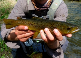 A Decent Brown