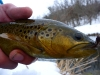 Driftless Area Brown