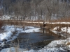 Trout Stream in the Winter