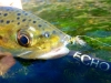 The Driftless Angler Shot