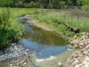 Driftless Area Stream (Low Flows)