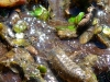 Sowbug and Caddis Larva Site #2