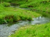 Driftless Area Trout Stream