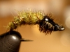 Caddis Larva