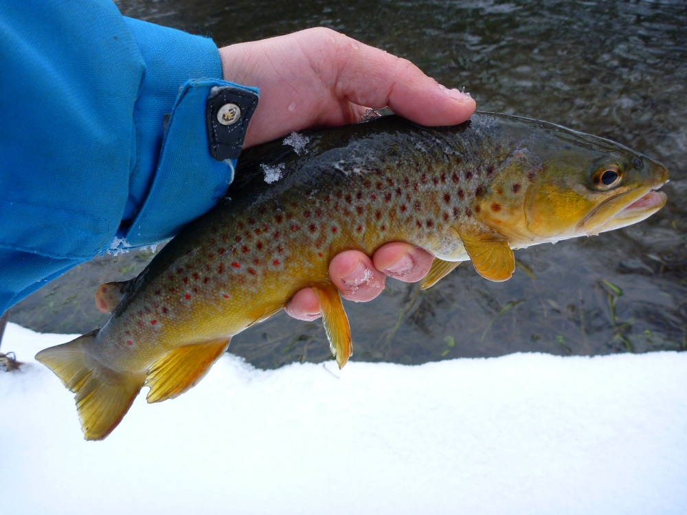 Driftless Brown