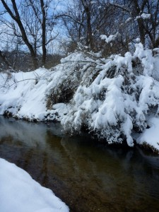 The Winter Creek