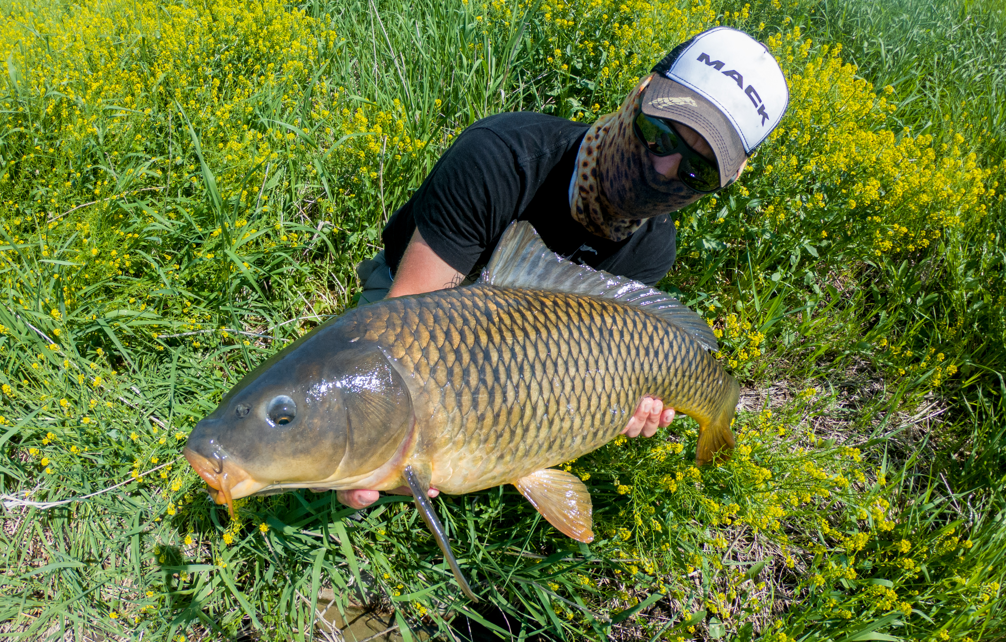 Carping Thoughts & Notes: 5/29/18